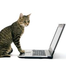 Cat Tech Support: You've Gotta Be Kitten Me!